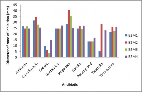 Bar diagram showing mean zone inhibition of four gut bacterial isolates from each Morphotype of sample B2 against nine antibiotics