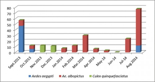 Month-wise mosquito species prevalence.