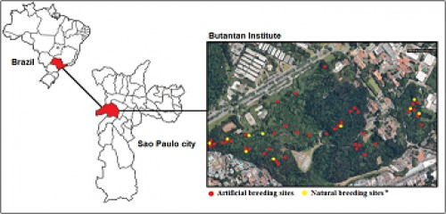 Location of study area and sampling sites in the Butantan Institute, Sao Paulo Brazil. *Natural breeding sites: temporary ground water and phytotelmata bromeliads