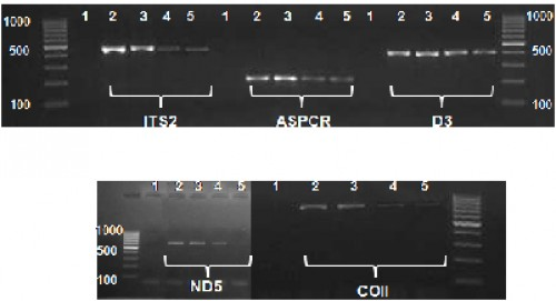 Gel images of the amplified PCR products for different nuclear and mitochondrial loci of <em>An. baimaii</em> DNA extracted using boiling method (lanes 2 & 3 fresh DNA, lanes 4 & 5 DNA stored for 30 months.