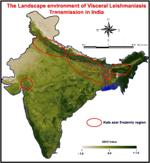 The Visceral Leishmaniasis / Kala-azar endemic data is overlaid on the mean NDVI; value; map of IRS WiFS data of India, the geographical distribution of Visceral Leishmaniasis is spatially associated with mean composite NDVI value range between; 0.08 - 0.53, (95% significance and; 5%; error precision with confidence interval, CI- 0.413 -0.544), p value <0.001. Source: M.Palaniyandi, et al., 2014