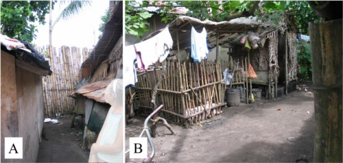 Bamboo housing in the Philippines. A: Bamboo windbreak. B: Bamboo livestock enclosure