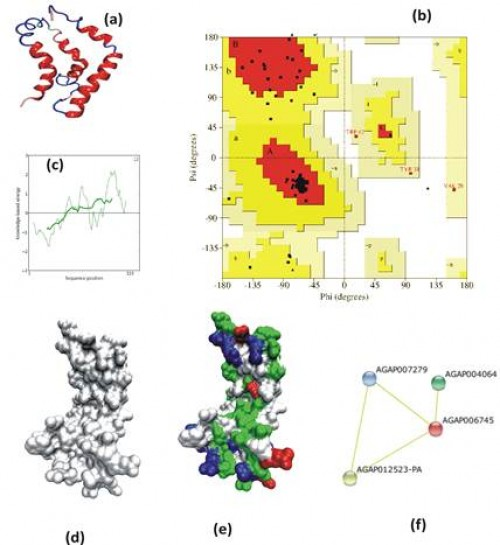 <strong>3D- <em>In silico</em> analysis of mosquito Ninjurin: </strong>(a) Secondary structure prediction of <em>AsNinj</em>L; (b) Ramachandran Plot analysis; (c) Prosa energy distribution of the molecular modeled mosquito Ninjurin; (d, e) Surface representation of the Ninjurin: two front views (d) one side view (e). Polar, negatively and positively charged atoms are shown in green, red and blue respectively; (g) STRING based network prediction analysis of <em>AsNinj </em>L