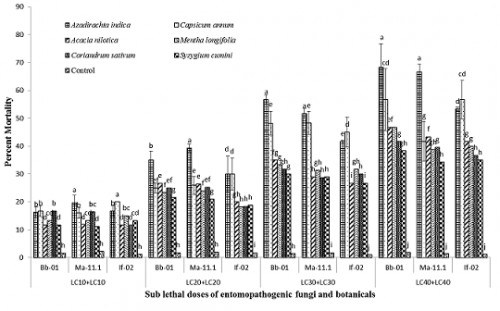 Percent larval mortality of <em>C. pipiens</em> (laboratory trail) after application of binary mixtures of fungi and botanicals. Means with different letters in each day are statistically different among treatments and control at <em>P</em><0.05.