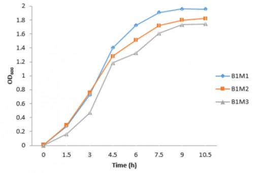 Growth curve of gut bacterial isolates from each of the three morphotypes of sample B1