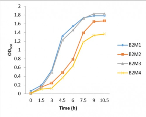 Growth curve of gut bacterial isolates from each of the four morphotypes of sample B