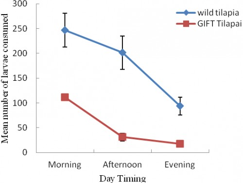 Consumption rate of fish (Wild and GIFT) Tilapia at different timing of day.