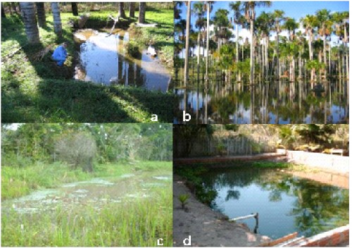 Types of Breeding-sites for <em>Anopheles</em> spp. found in the Juruá Valley. (a) excavation, (b) natural lagoon and creek, (c) reservoir, (d) fish-farm tanks.