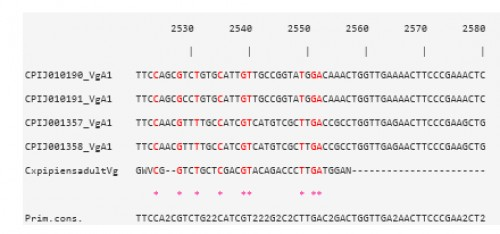 CLUSTAL W multiple alignments at the Vtg nucleotide level of the sequence contig, for <em>Cx. pipiens </em>females 48 h PBM, with four Vg-A1 transcripts in <em>Cx. quinquefasciatus</em>