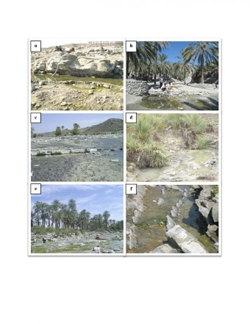 Six localities of larval collection in Bashagard County, Hormozgan Province, Iran, 2009–2011. (a) Daranar, River bed. (b) Dargazan, Palm field. (c) Molkan, River bed. (d) Nasary, River bed. (e) Sardasht, River bed. (f) Tisoor, River bed (Original photographs)