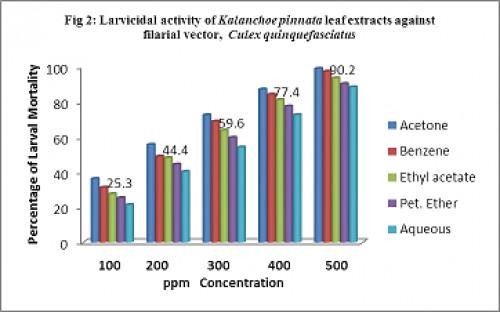 Larvicidal activity of<em> Kalanchoe pinnata</em> leaf extracts against filarial vector, <em>Culex quinquefasciatus</em>