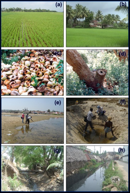 Field pictures of vector mosquitoes breeding sources, pictures (a) and (b) JE vector (<em>Culexvishnui</em> groups), and malaria vector <em>Anopheles </em>genus mosquitoes breeding habitats, pictures (c ) and (d) dengue and chikungunya vector (<em>Aedes</em> genus) breeding sources, pictures (e) and (f) malaria vector (<em>Anopheles </em>genus) breeding grounds and pictures (g) and (h) filariasis vectors (<em>Culex quinquefasciatus) </em>breeding habitat sources