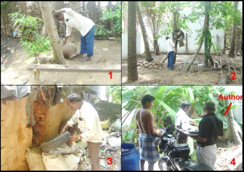 Picture 1, 2, and 3 A field technician is checking the <em>Aedes</em> vector mosquito breeding habitats, 4 The author is conducting the field survey for <em>Aedes </em>breeding habitats in the selected sites/houses, using the GARMIN 12 XL virtual GPS instrument
