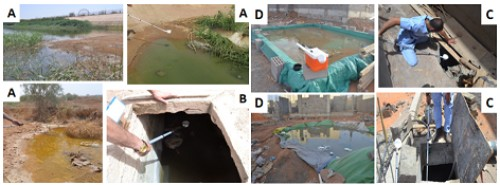 Examples of breeding sites A: seepage water, B: Septic tank, C: underground water reservoir, D: Surface water reservoir used for under construction buildings