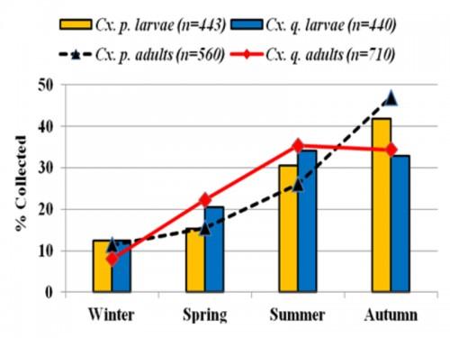 Seasonal abundance of Cx. pipiens (C.p.) and Cx. quinquefasciatus (C.q.) in Hail (compiled result of all areas)