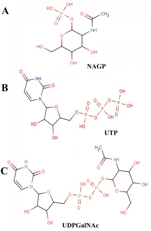 Schematic representations of 2D images of ligands used in this study