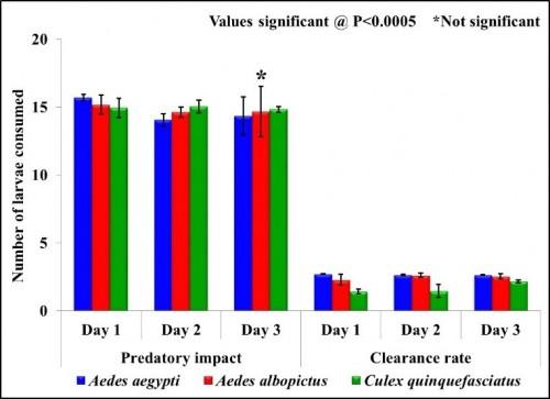 Predatory impact and Clearance rate of <em>Nepa cinerea</em> against III instar larvae