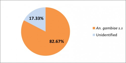 Percentage distribution of the identified and unidentified <em>Anopheles gambaie</em> complex mosquitoes