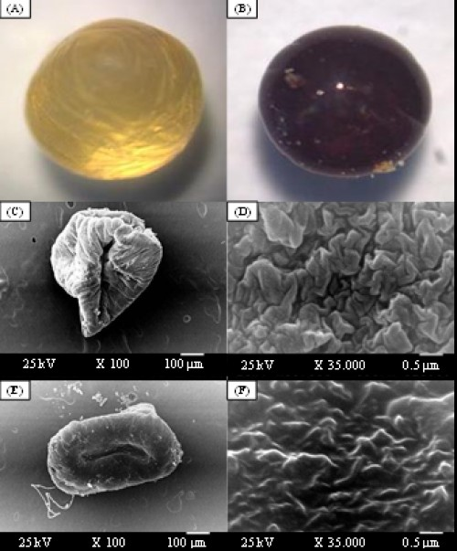 Stereo optical microscope morphology of whole shape (magnification, X10) of the wet capsules prepared from chitosan (1%), alginate (1%), glutaraldehyde (2%) and gelatine of 2.5%, before (A) and after (B) drying. SEM photograph of unloaded capsules (C) and its surface morphology (D); and SEM photograph of loaded capsules with temephos (E) and its surface morphology (F). Scale bar 100 µm and magnification x100 for whole capsules and scale bar 0.5 µm and magnification x35000 for their surface morphologies
