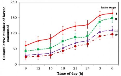 Cumulative number of <em>Aedes aegypti </em>larvae consumed by 12<sup>th</sup> instar of<em> Bradinopyga geminata</em> over a period of 24 hours  (predator – prey ratio was 1:200)