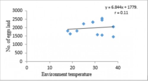 Correlation between no. of eggs laid and environment temperature<strong> </strong>where r= 0.11